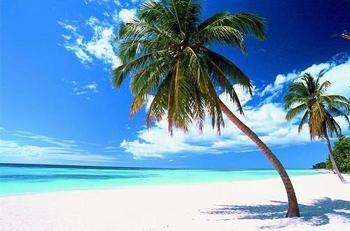 playa_palmera