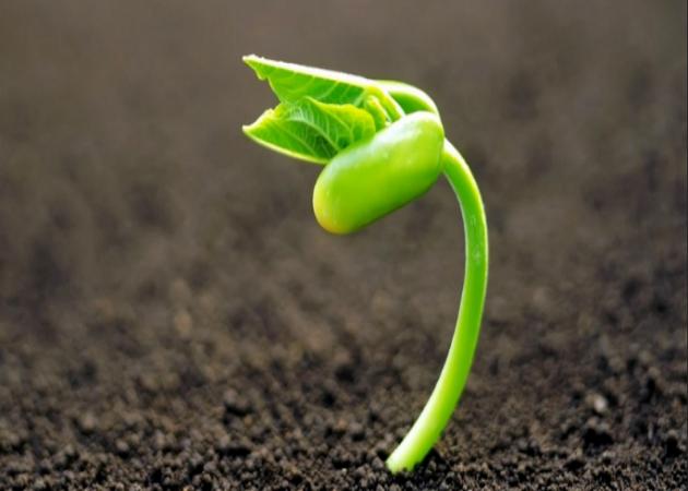 Cómo hacer crecer tu negocio más rápido y mejor