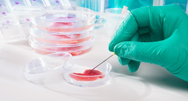 in-vitro-meat