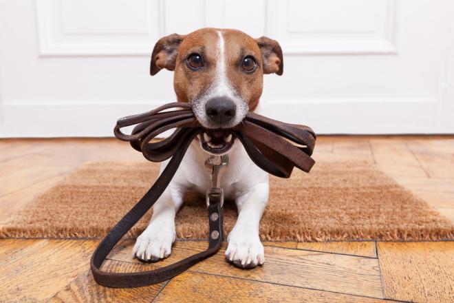 perro_paseo