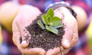modernizacion empresas agrarias