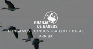 El Ganso, granja de gansos