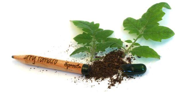 Llega a España Sprout, el lápiz sostenible que se convierte en una planta
