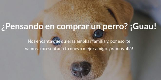 Minuevomejoramigo.com: adopta un perro gracias al SEO