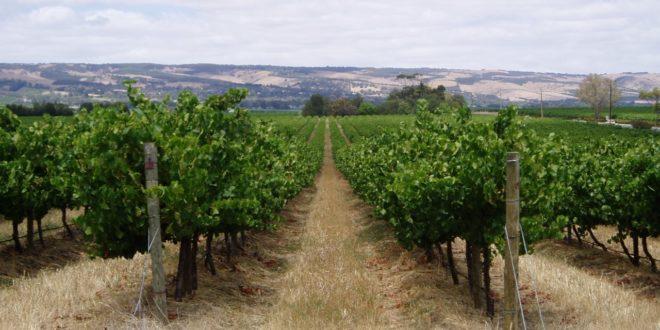 Cultiply multiplica la fermentación de vino y cerveza y ahorra hasta un 90% sus costes