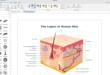Edraw Max: el software que realiza todo tipo de diagramas