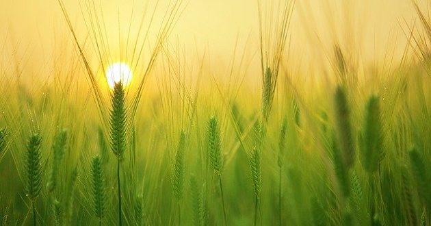 El sector agrario reclama la vía de la colaboración público-privada para gestionar las ayudas europeas